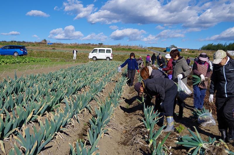 JA甘楽富岡の皆さんから下仁田ねぎの特徴や収穫方法を聞いて、さぁ体験開始!